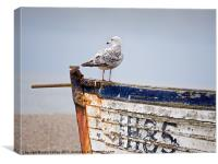 """""""Look Out""""  - Herring Gull on a derelict fishing b, Canvas Print"""