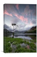 Buttermere Lone Tree Sunrise, Canvas Print