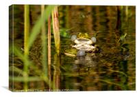 Pond Frogs mating, Canvas Print