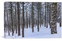 Forest in Winter, Canvas Print