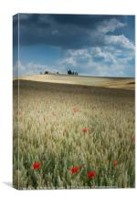 Poppies in Champagne, Canvas Print