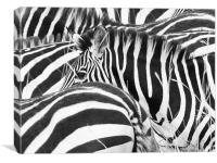Zebra Abstract, Canvas Print