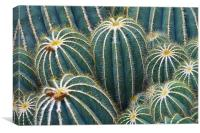 Cactus Abstract, Canvas Print
