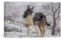 Taff in the snow, Canvas Print