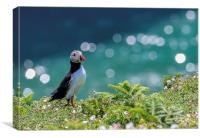 Puffin in white Campion, Skomer, Canvas Print