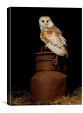 Barn Owl on milk churn, Canvas Print