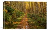 Mystical Elan Valley Woodland track, Canvas Print