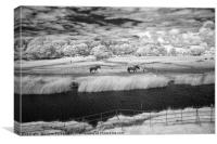 Horses at Ogmore, Canvas Print