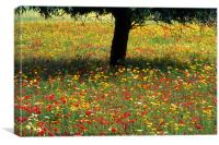 Mallorcan Wild Flowers, Canvas Print