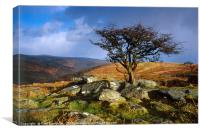 Tree at Combestone Tor, Canvas Print