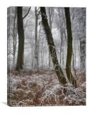 Trees in Hoar Frost, Canvas Print