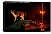 Nocturne for violin a cat, Canvas Print