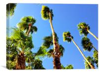 Palm Trees Looking Up, Canvas Print