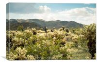 Super Bloom Cactus 7377 Joshua Tree Desert Califor, Canvas Print