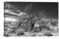 Tree Of Life Joshua Tree 7325, Canvas Print