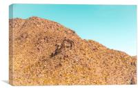 Landscape Joshua Tree 7341, Canvas Print