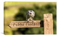 Owl resting on the Sign Post, Canvas Print