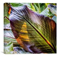 Life in a Leaf, Canvas Print