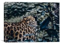 Too Close for Comfort!, Canvas Print