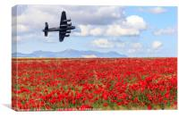 Lancaster bomber passing over a field of poppies, Canvas Print