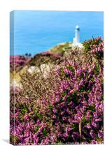 Purple heather with North Stack lighthouse, Canvas Print