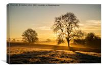Frosty golden sunrise, Canvas Print