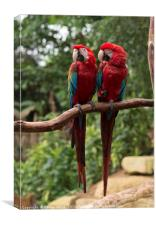 couple of red parrots in love, Canvas Print