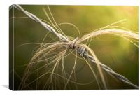 Rural Barbed Wire Animal Hair, Canvas Print