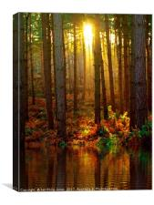 Delamere Forest Sunset, Canvas Print