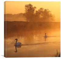 Swans in the mist, Canvas Print