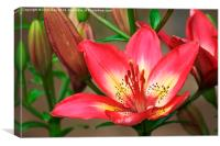 Arsenal Lily, Canvas Print