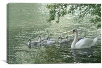 Mute Swans, Canvas Print