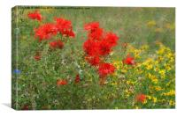 Impressionist Poppies, Canvas Print