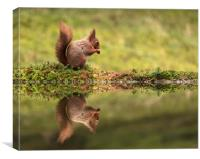 Red Squirrel and reflection, Canvas Print