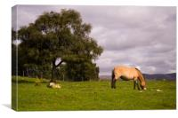 Horse and a Tree, Canvas Print