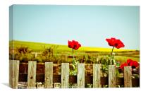 Poppies on a fence, Canvas Print
