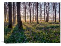 Misty Bluebell Morning, Canvas Print