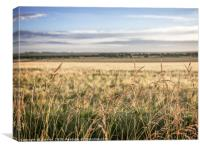 Wheatfield in Summer, Canvas Print