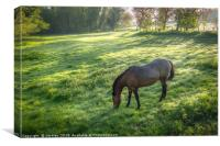 Dappled Sunlight and a Horse Grazing, Canvas Print