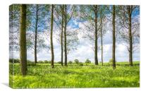 Trees  Leaves and White Flowers, Canvas Print