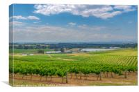 Hunter Valley Vinyard , Canvas Print