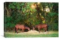 Two horses eating hay under morning sun, Canvas Print