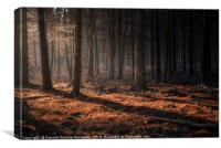 Dark autumn forest with beams of light, Canvas Print