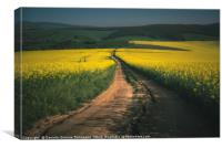 Rapeseed fields in the Moravia Region, Canvas Print