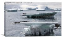 Adelie penguin on ice, Canvas Print