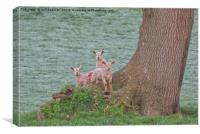 3 Young Lambs by a Tree in Somerset, Canvas Print