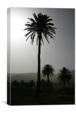 Lonesome Palm, Canvas Print