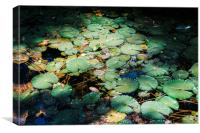 Water lillies, Canvas Print