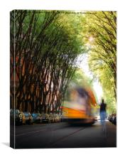 Moving tram on tree-lined path , Canvas Print