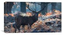 Majestic Stag, Canvas Print